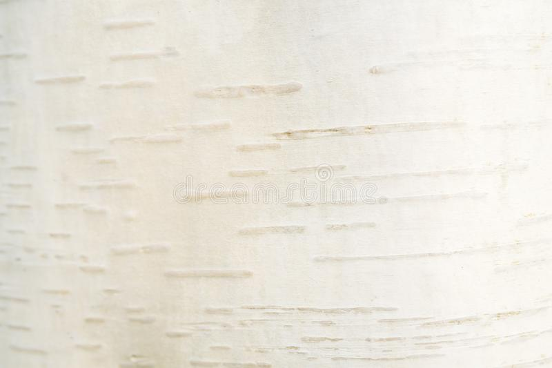 Fundo da casca de vidoeiro branco Conceito responsável natural e do eco Textura na moda branca fotografia de stock