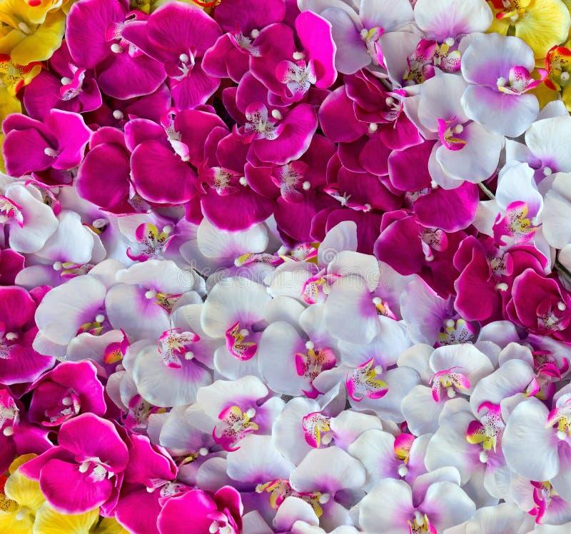 Fundo da decoração da orquídea fotografia de stock