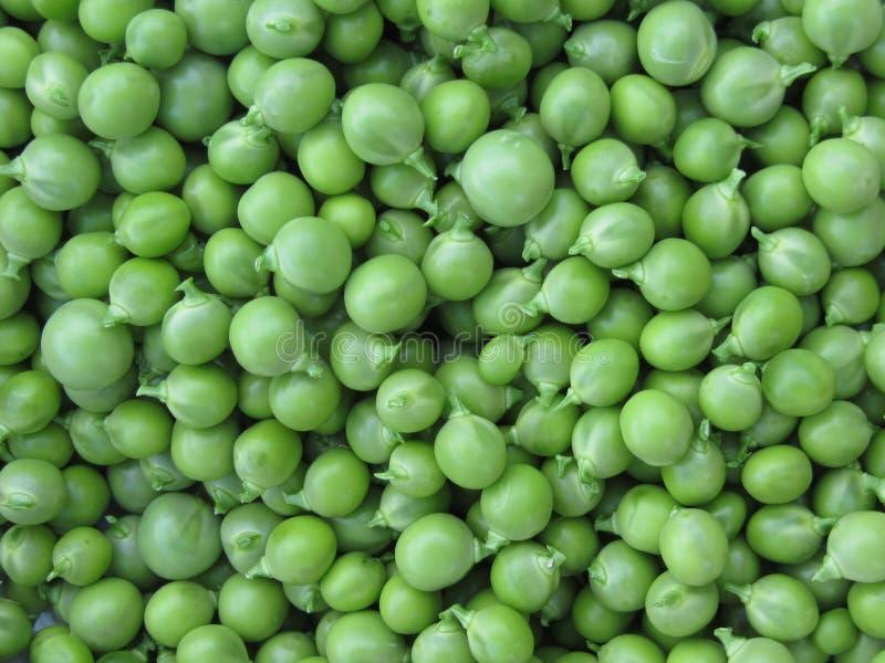 Fundo da ervilha verde Textura de ervilhas verdes maduras imagem de stock royalty free