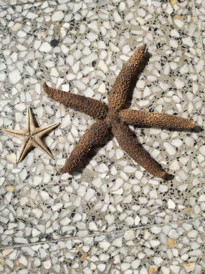Fundo da estrela do mar imagem de stock royalty free