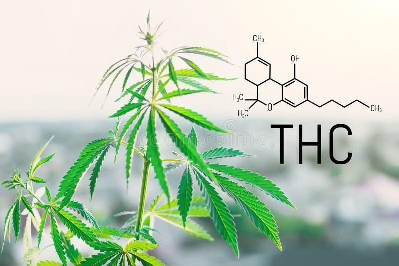 Fundo da fórmula de molécula de Tetrahydrocannabinol com marijuana Estrutura molecular THC foto de stock royalty free