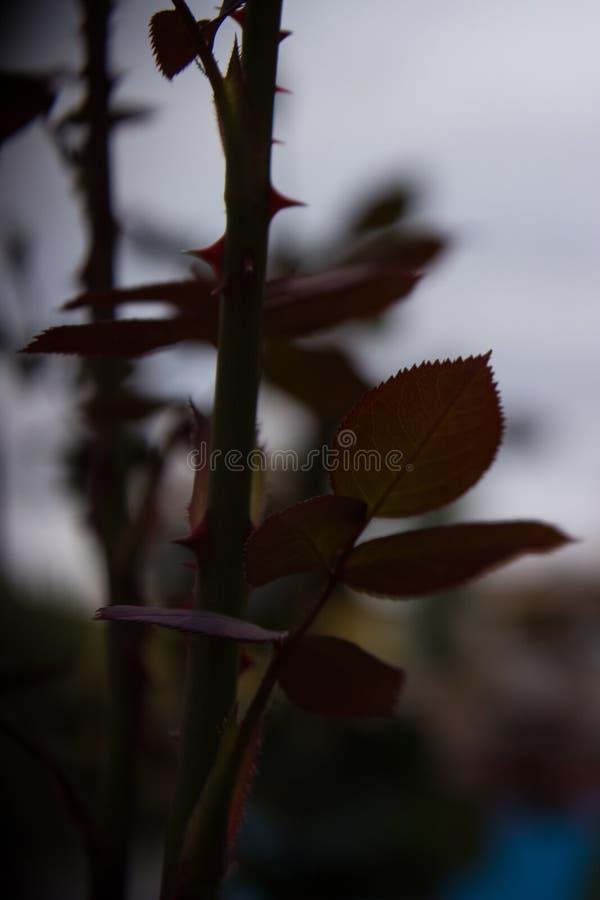 Fundo da flor imagens de stock royalty free