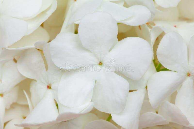 Fundo da flor branca fotos de stock royalty free