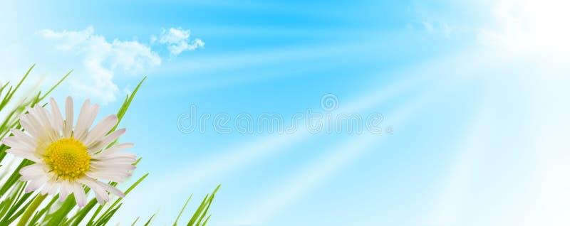 Fundo da flor, da grama e do sol da mola fotografia de stock