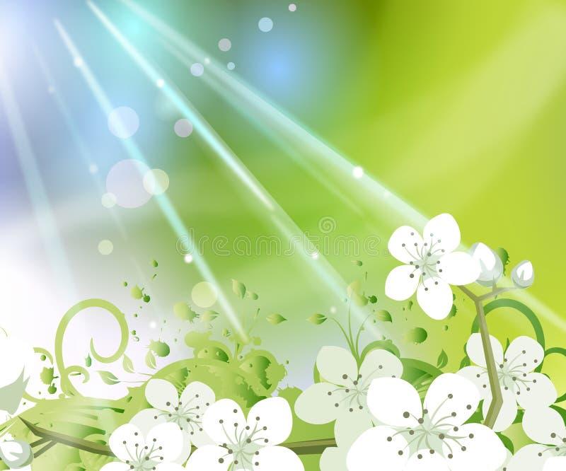 Fundo da flor da mola ilustração do vetor