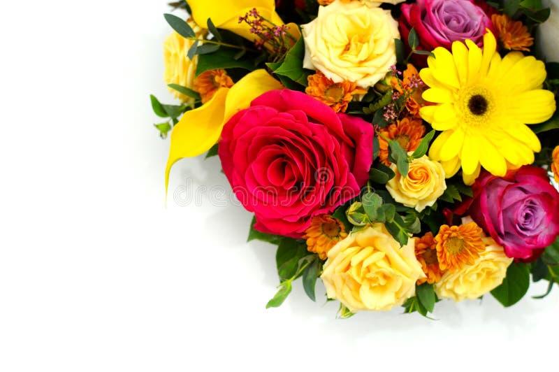 Fundo da flor de flores frescas imagem de stock royalty free