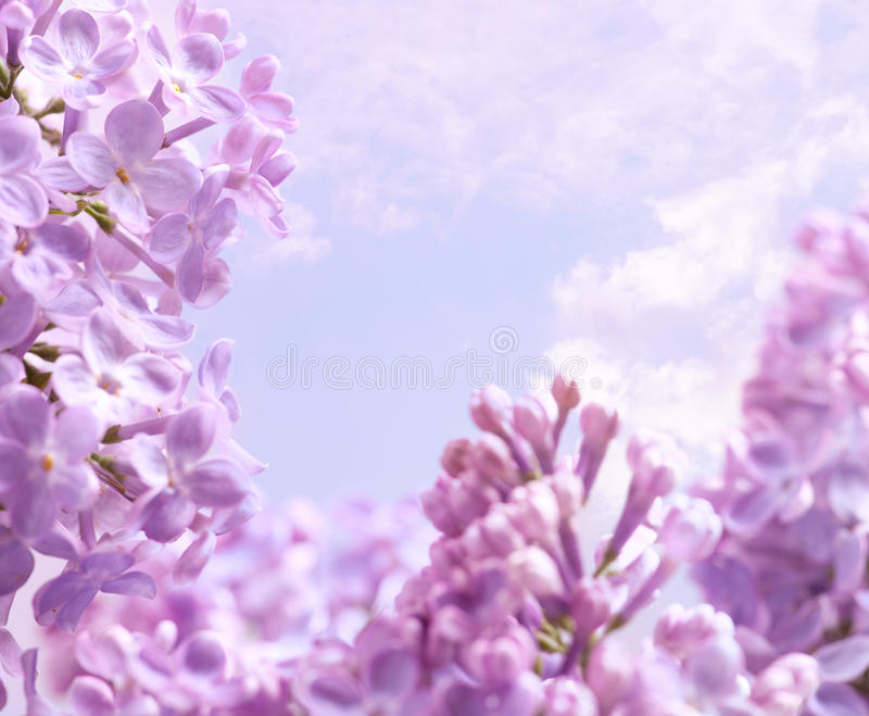 Fundo da flor do lilac da mola da arte fotos de stock royalty free