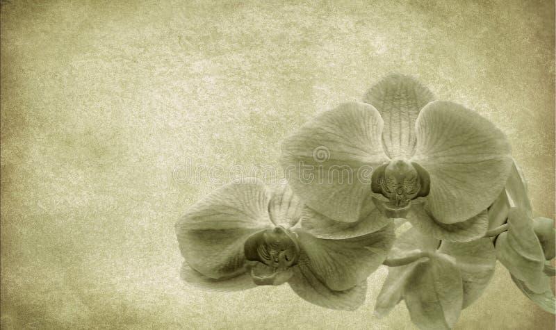 Fundo da flor do vintage ilustração stock