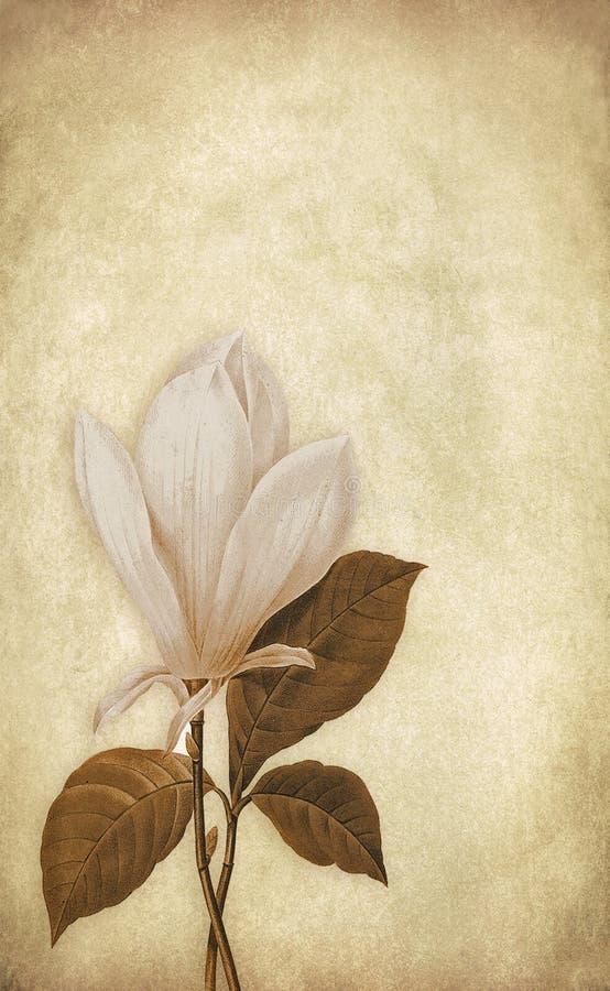 Fundo da flor do vintage ilustração royalty free