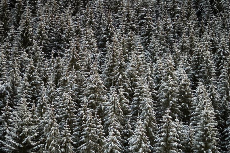 Fundo da floresta do inverno imagens de stock royalty free