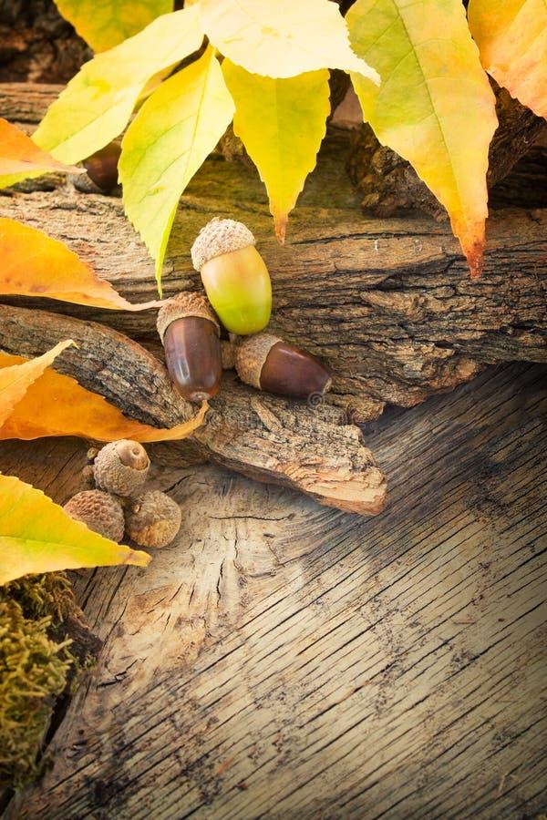 Fundo da floresta do outono foto de stock royalty free