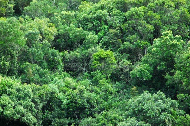 Fundo da floresta húmida fotografia de stock