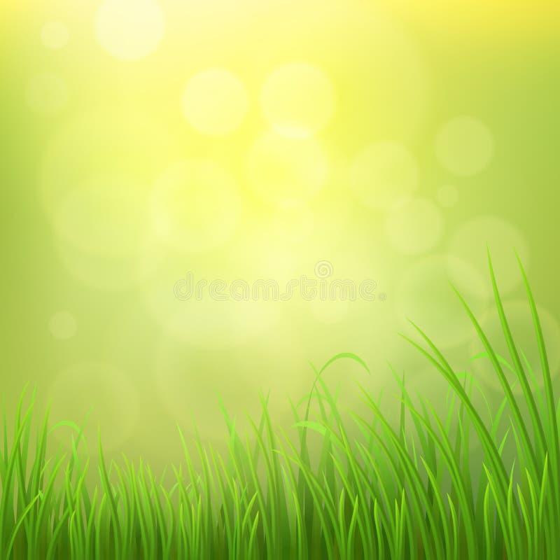 Fundo da grama da mola ilustração royalty free