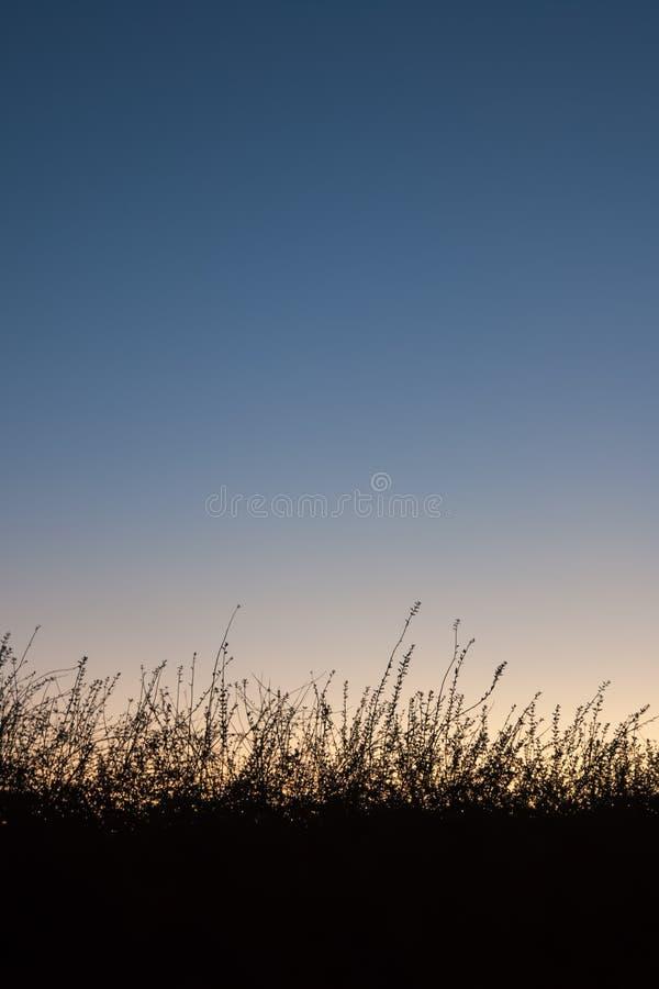 Fundo da grama da silhueta fotografia de stock