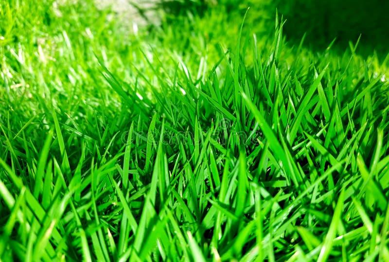 Fundo da grama no verde fotos de stock royalty free