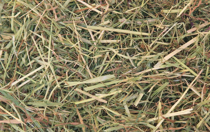 Fundo da grama secada foto de stock