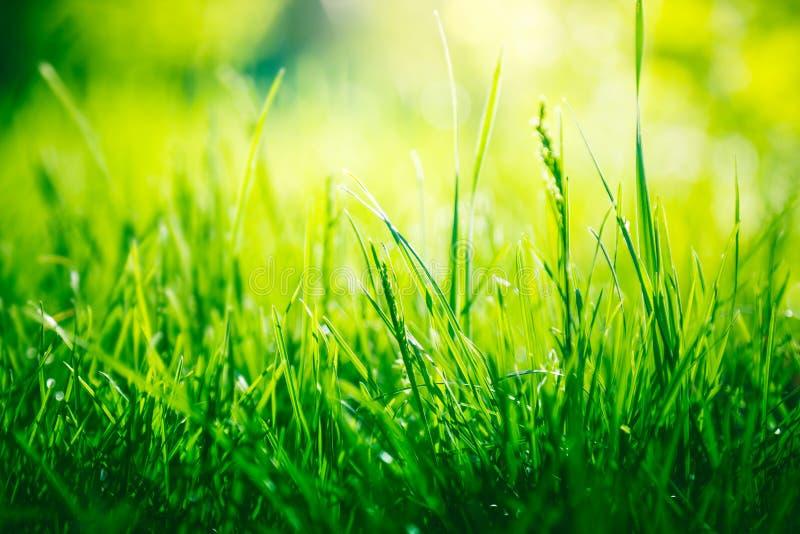 Fundo da grama verde com espaço da cópia imagem de stock royalty free