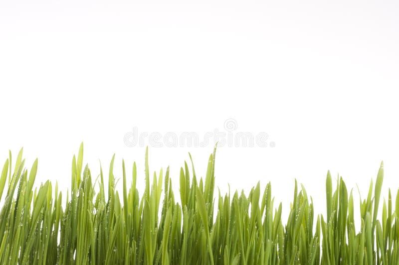 Fundo da grama verde da mola. fotos de stock royalty free