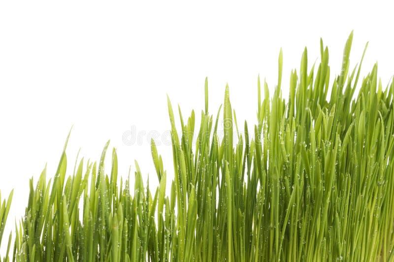 Fundo da grama verde da mola. imagens de stock royalty free