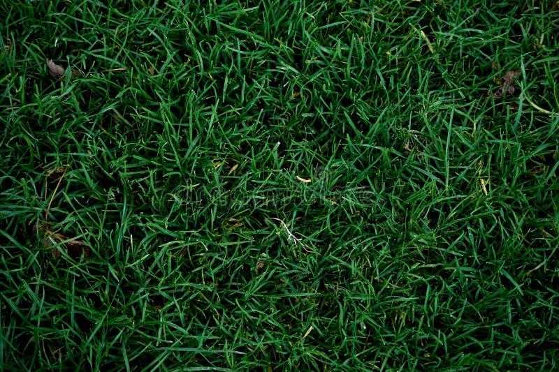 Fundo da grama verde - próximo acima de - vista superior foto de stock