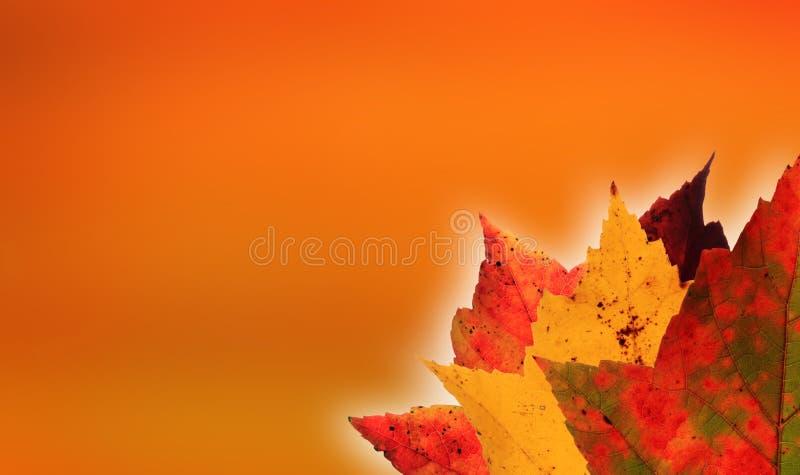 Fundo da laranja das folhas de outono imagem de stock