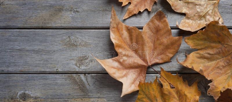 Fundo da madeira da queda do outono