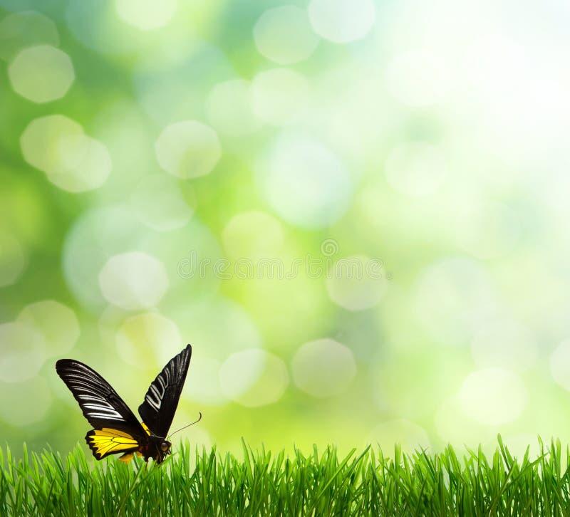 Fundo da mola. borboleta imagem de stock royalty free
