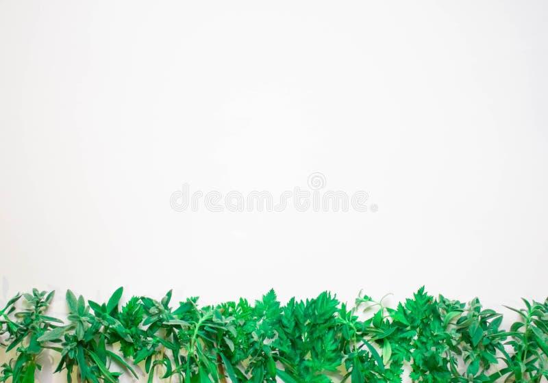 Fundo da mola com as plantas verdes e as folhas novas no quadro branco do espaço da cópia da opinião superior do fundo ilustração stock