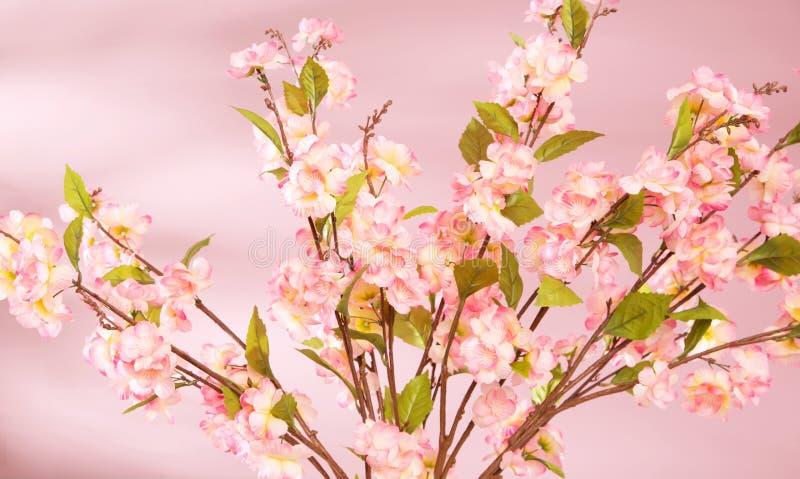 Fundo da mola com flores cor-de-rosa fotos de stock royalty free