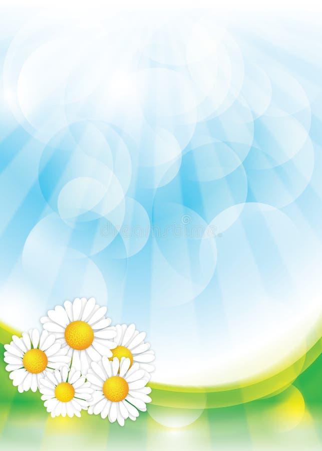 Fundo da mola com flores da camomila fotografia de stock