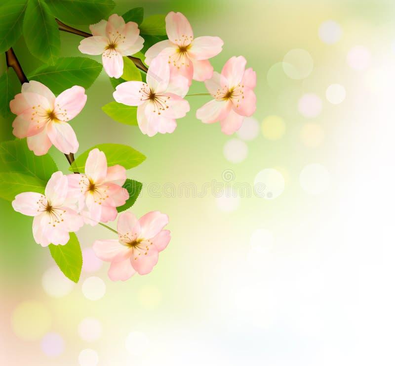 Fundo da mola com refeição matinal de florescência da árvore ilustração royalty free