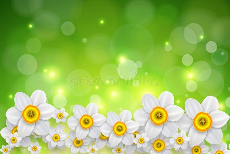 Fundo da mola das flores ilustração royalty free