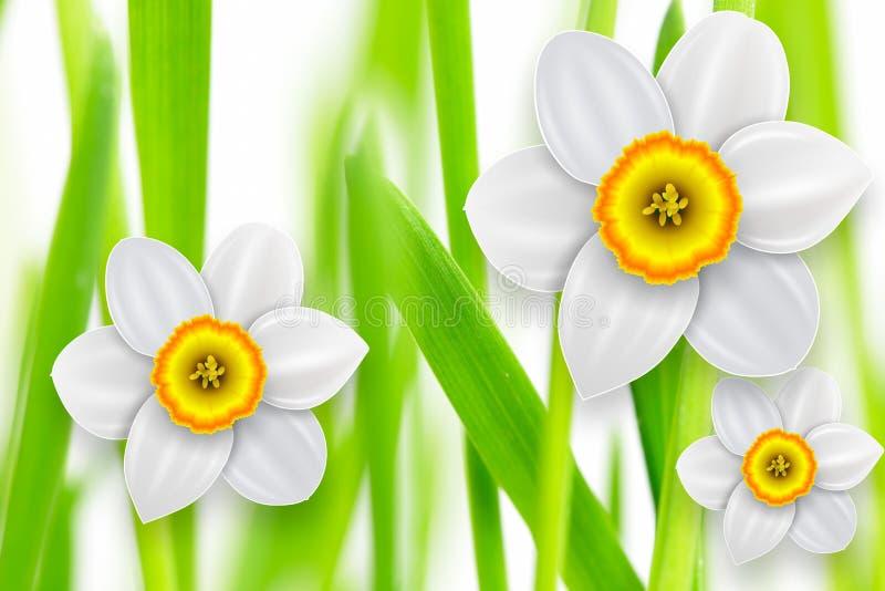 Fundo da mola das flores ilustração do vetor