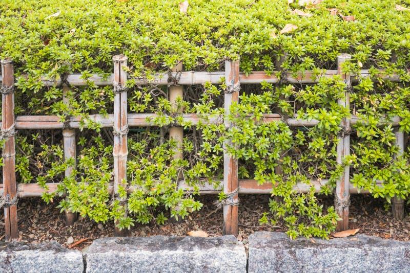 Fundo da natureza com detalhe da cerca de bambu fotos de stock