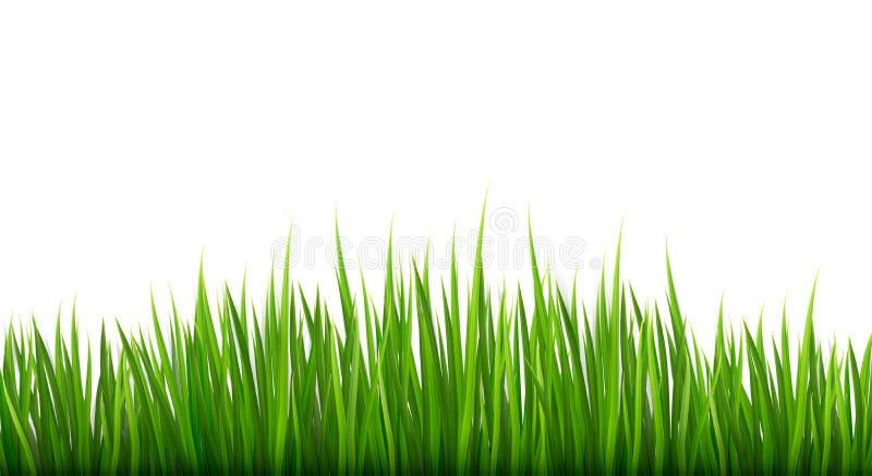 Fundo da natureza com grama verde. ilustração stock