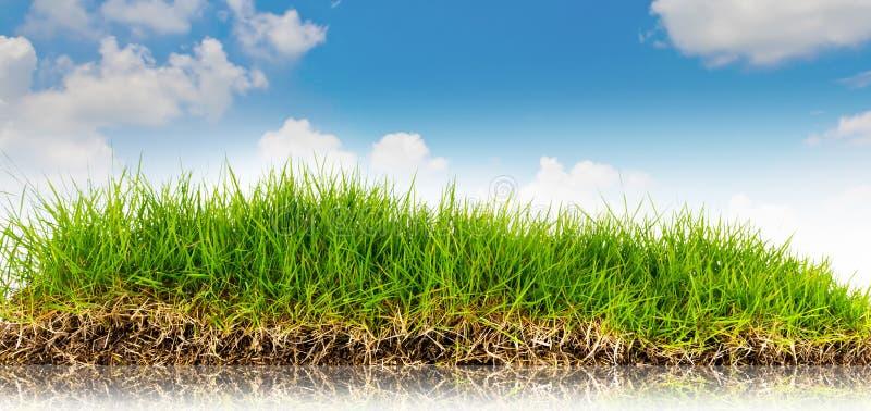 Fundo da natureza da mola com grama e o céu azul dentro fotografia de stock royalty free