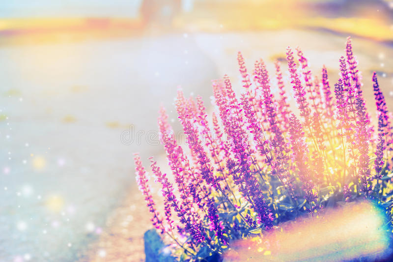 Fundo da natureza do verão com a florescência prudente, exterior foto de stock royalty free