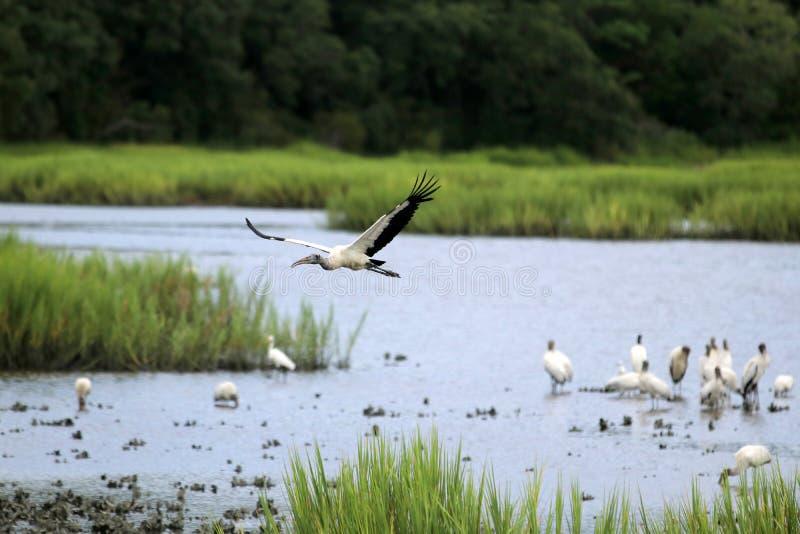 Fundo da natureza dos animais selvagens de South Carolina foto de stock