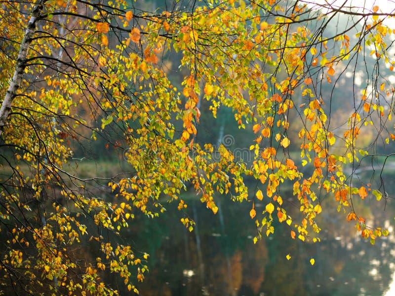 Fundo da natureza, folhas de outono bonitas no lago da floresta imagem de stock royalty free