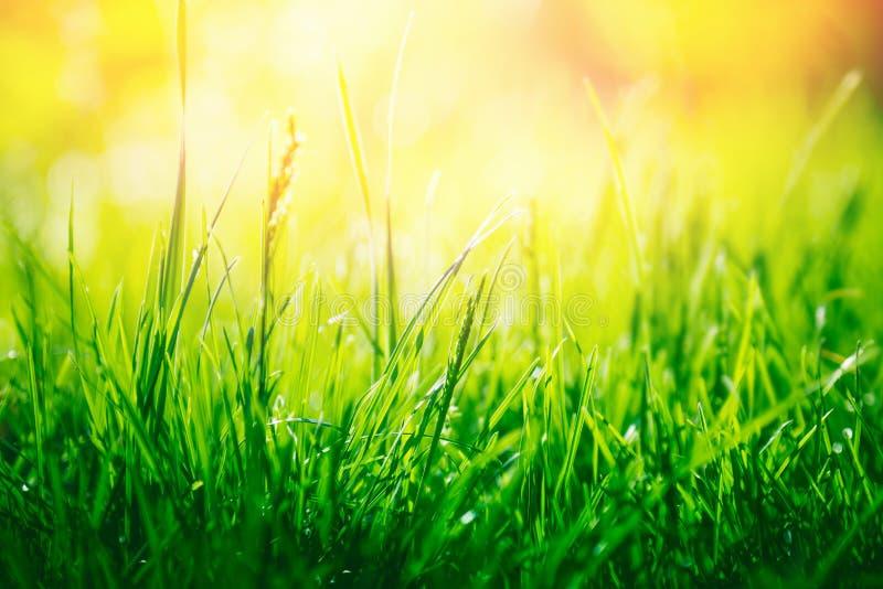 Fundo da natureza da grama verde imagens de stock royalty free