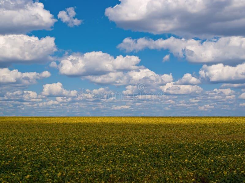 Fundo da obscuridade - céu azul e um campo imagens de stock royalty free