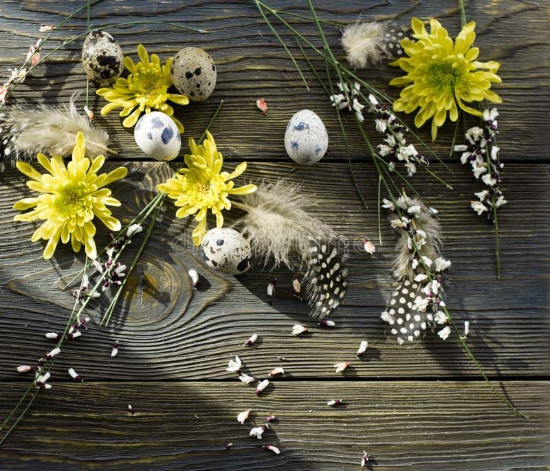Fundo da Páscoa, ovos de codorniz e crisântemo amarelo sobre o fundo de madeira imagens de stock