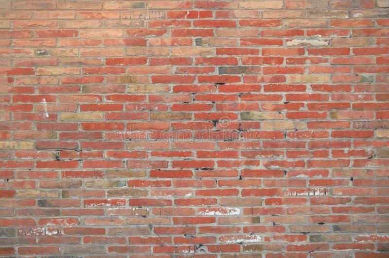 Fundo da parede de tijolo vermelho em um estúdio da foto do fotógrafo foto de stock