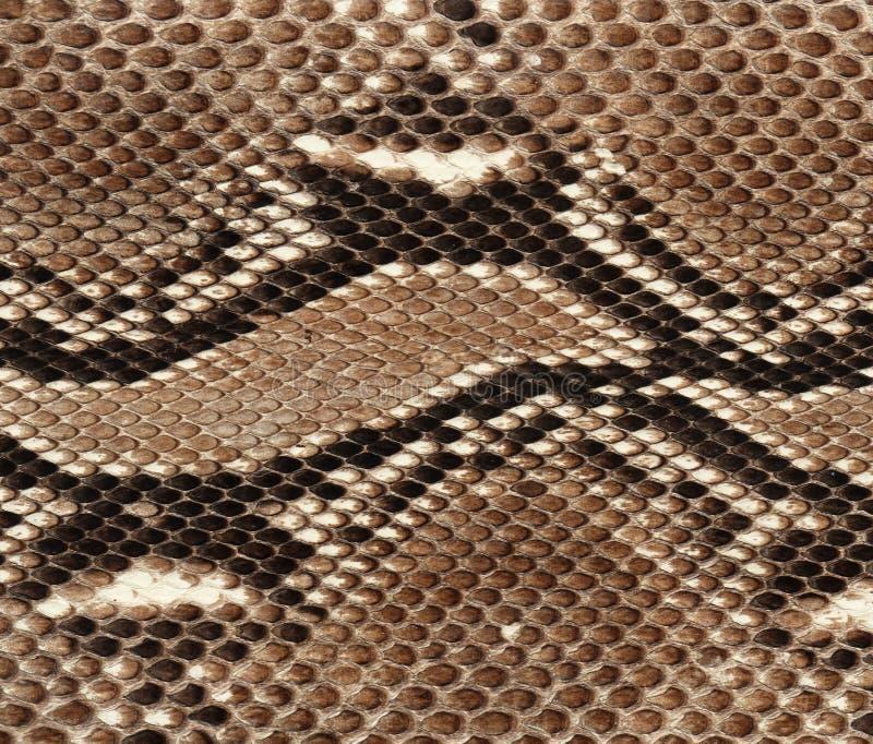 Fundo da pele de serpente imagens de stock