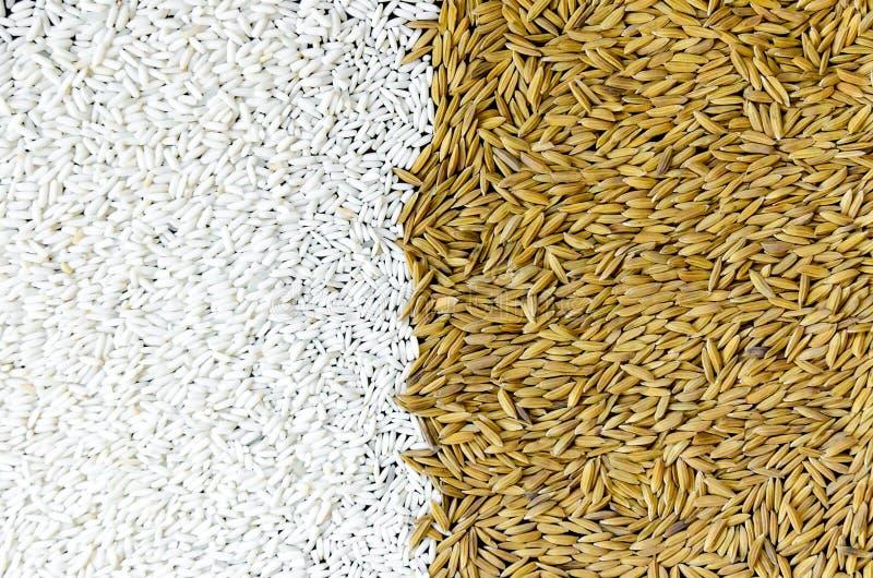 Fundo da pilha do arroz 'paddy' e e da semente do arroz fotos de stock royalty free