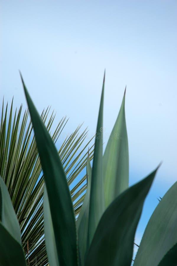 Fundo da planta tropical imagem de stock