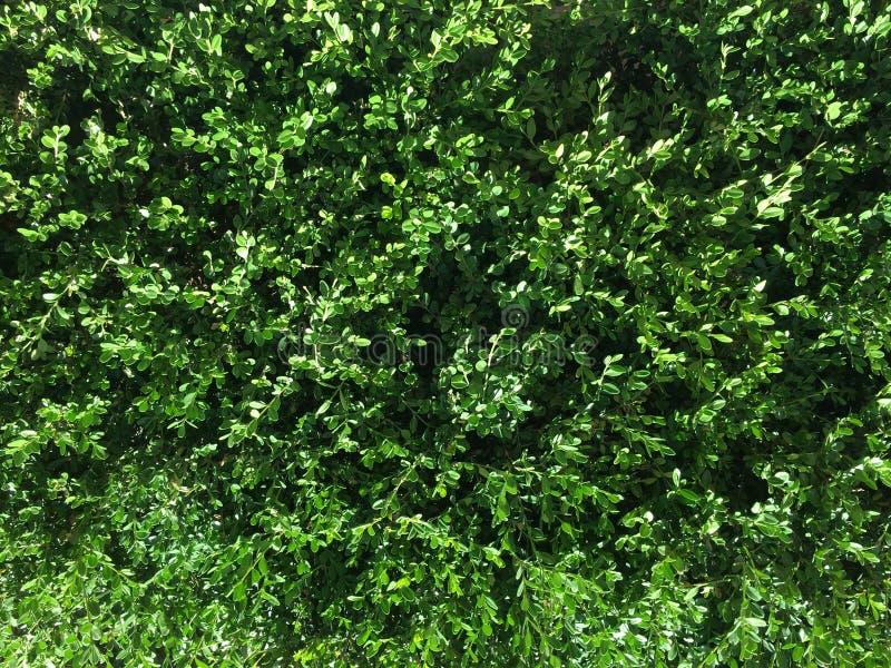 Fundo da planta verde foto de stock