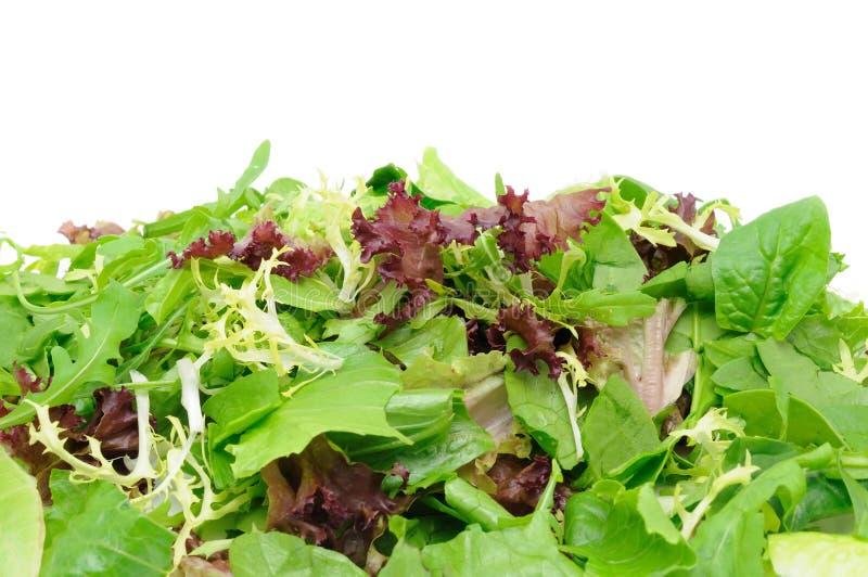 Fundo da salada verde imagens de stock