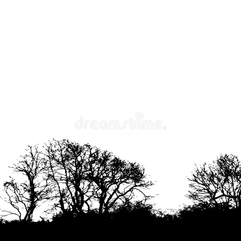 Fundo da silhueta da árvore