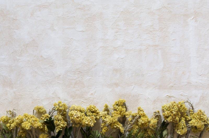 Fundo da textura da argila de papel com flores secadas fotos de stock